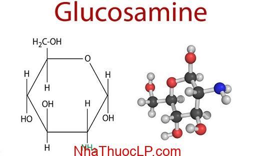 Hoat dong cua Glucosamine nhu the nao va no co hoat dong khong (1)